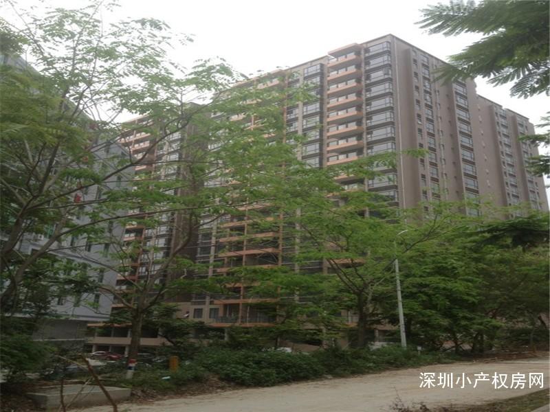 西丽唯一村委统建楼出售《望云国际》村委一手过户,直接村委盖章签合同,1.8万/平起价